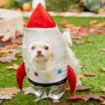 21 of the year's most adorable pet Halloween costumes